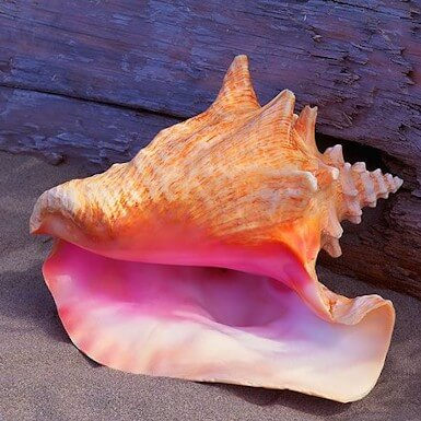 3D printed material mimicks a conch shell